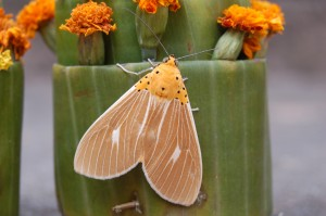 A lepidopterologist's delight